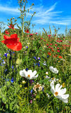 Summer meadow with wild flowers Stock Images