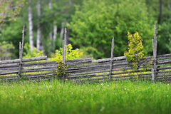 Summer meadow with a wooden fence Stock Photography