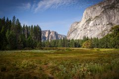 Summer Meadow in Yosemite Valley. A restful meadow in the Yosemite Valley, California, USA, surrounded by the strength of granite and the green of Ponderosa Stock Images