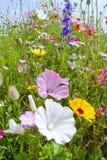 Summer meadows Stock Photography