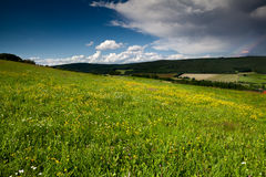 Summer meadows before rain Royalty Free Stock Image