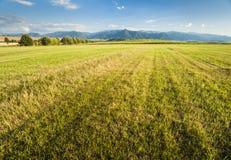 Summer meadows Stock Photo