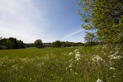 Summer meadows Stock Photography