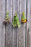 Summer medical herbs bunches on wooden wall Royalty Free Stock Images