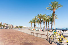 Summer Mediterranean beach yellow bicycle and grove of palm tree Royalty Free Stock Photography