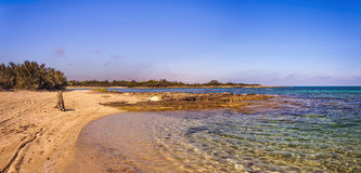 SUMMER.Mediterranean maquis: a nature reserve of Torre Guaceto.BRINDISI (Apulia)-ITALY- Royalty Free Stock Photo