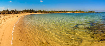 SUMMER.Mediterranean maquis: a nature reserve of Torre Guaceto.BRINDISI (Apulia)-ITALY- Royalty Free Stock Photography