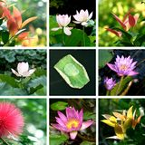Summer melody. Colorful summer images mosaic,quite leaves and lotus Royalty Free Stock Photos