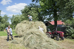 In the summer on the men removed the hay from the field and plac. In summer, a bright sunny day on the men removed the hay from the field and placed him in the Stock Photography