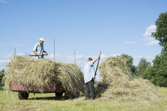 In the summer on the men removed the hay from the field and plac. In summer, a bright sunny day on the men removed the hay from the field and placed him in the Stock Photos