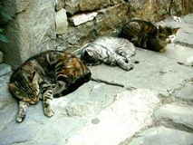 Cats sleeping on the street during siesta Stock Image