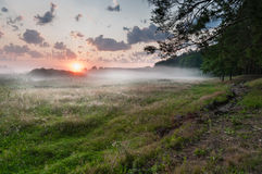Summer misty dawn on the meadow Royalty Free Stock Photography