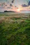 Summer misty dawn on the meadow Royalty Free Stock Images