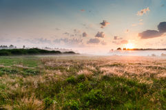 Summer misty dawn on the meadow Royalty Free Stock Photo