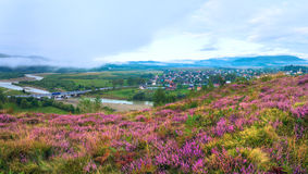 Summer misty morning country panorama. Royalty Free Stock Image