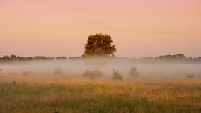 Summer misty morning in a meadow Royalty Free Stock Photography
