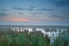Summer misty sunrise over bog Stock Photos