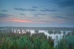 Summer misty sunrise over bog Stock Photos