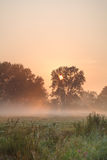 Summer misty sunrise Royalty Free Stock Photography