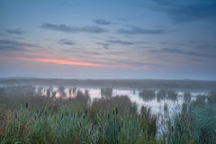 Summer misty sunrise over swamp Stock Photography