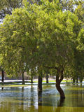 Summer Monsoon in Phoenix park, AZ. Monsoon flood waters around shady trees in Cortez park, Phoenix, Arizona Stock Images