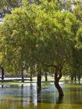 Summer Monsoon in Phoenix park, AZ Stock Images