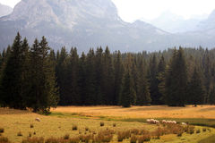 Summer in Montenegro. Travel in Montenegro. Background. Durmitor Royalty Free Stock Photography
