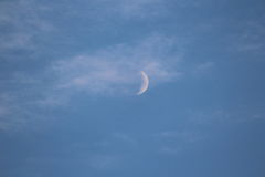 Summer moon Royalty Free Stock Image