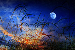 Summer moon night. Grass blades in the foreground and blue moon night in the background Royalty Free Stock Photos