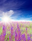 Summer morning. Sun, blue sky and wildflowers Royalty Free Stock Photography