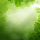 Summer morning - abstract green background. Summer morning - abstract background with leaves Royalty Free Stock Photography