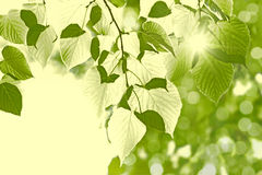 Summer morning - abstract green background. Green leaves border, abstract background Royalty Free Stock Photos