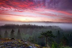 Summer morning dawn. Early summer morning dawn in foggy forest valley in Nuuksio National Park, Finland Stock Images