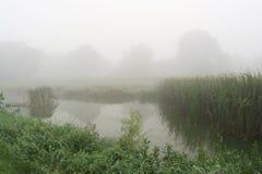 Summer morning fog Royalty Free Stock Image
