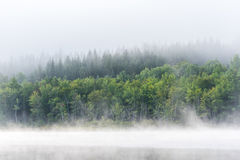 Summer morning foggy mist rises from lake into cool air. Royalty Free Stock Photo