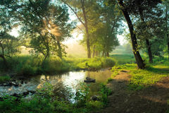 Summer morning in forest. Beautiful summer morning in wood with sun rays and a fog from the river Royalty Free Stock Photo