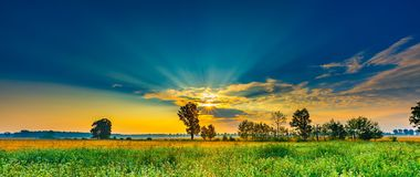 Summer morning landscape on buckwheat field with weeds Royalty Free Stock Photography