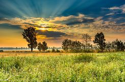 Summer morning landscape on buckwheat field with weeds Stock Photos