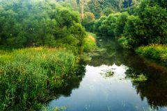 Summer morning river Stock Photography