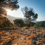 Summer morning landscape. Montenegro Stock Photo
