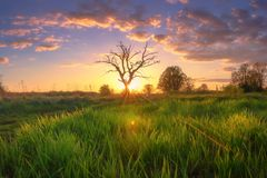 Summer morning landscape at sunrise. Amazing rural scenery. Sun shining on green grass on meadow stock photography