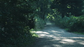 Summer morning park walkway with man running and tailing away. stock video footage