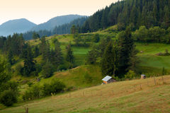 Summer morning in the Rhodope mountain Royalty Free Stock Photo