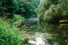 Summer morning river Stock Image