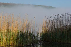 Summer morning on the  river. mornning fog Royalty Free Stock Images