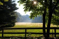 Summer morning Stock Photo
