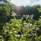 Summer Morning Wildflowers. Illuminated by the sun`s warming rays royalty free stock image