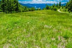 Summer at Mount Falcon Park in Colorado stock image