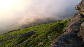 Summer mountain. Carpathian, Ukraine stock footage