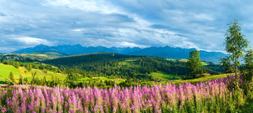 Summer mountain country panorama (Gliczarow Gorny, Poland). Summer evening mountain village outskirts with pink flowers in front and Tatra range behind ( Stock Images
